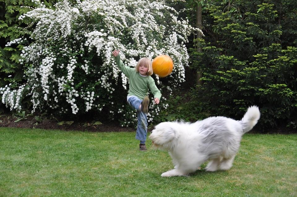 un enfant tape dans un ballon dans son jardin avec son chien